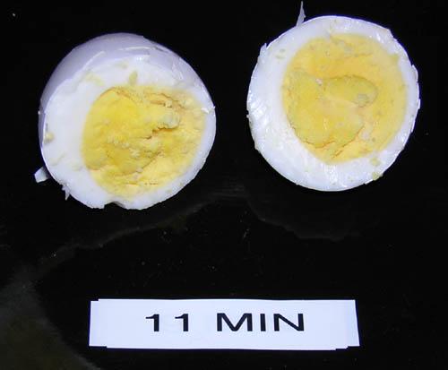 egg_11m.jpg