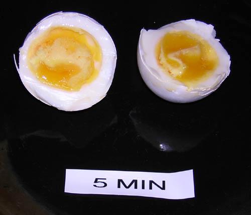 egg_5m.jpg