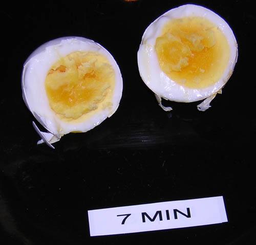 egg_7m.jpg