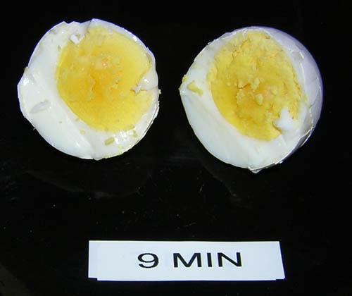 egg_9m.jpg